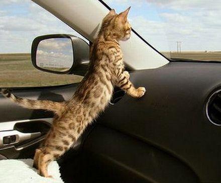 перевозка животных в машине