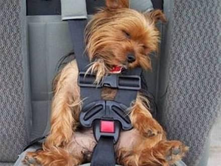 правила провоза собак