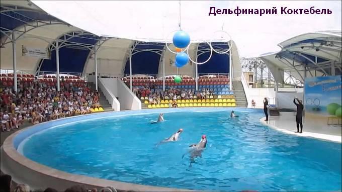 фото дельфинария в коктебель